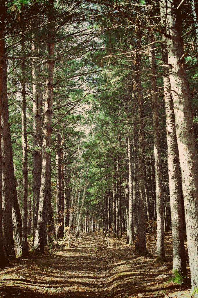 Поиск локаций для съемок — нашли волшебный лес!